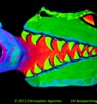 UV_body_painting_GatorEatingJose_1horizontal_agostinoarts